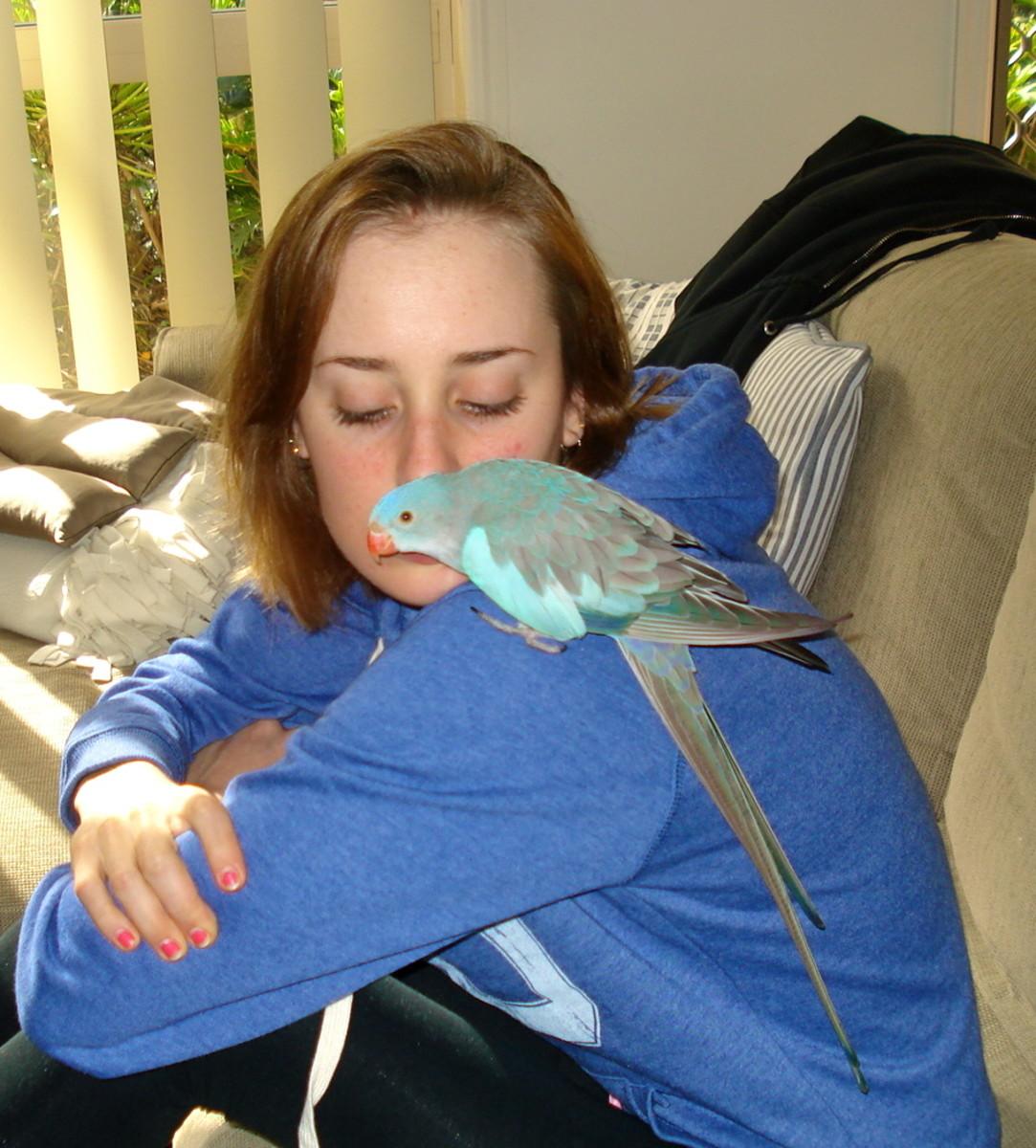 A single Princess Parrot can make a delightful pet.