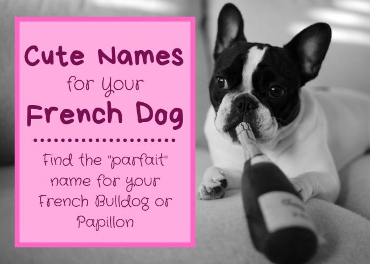 "Do you have a French dog? Why not give them a name ""en français""?"