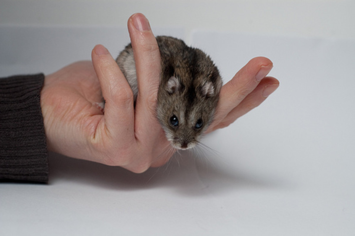 Hamsters can spread disease too.