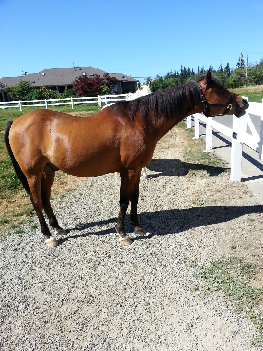 Buba (short for Bubaroo) is a 26-year-old ex-Arabian racehorse who now enjoys eating and having his belly scratched.