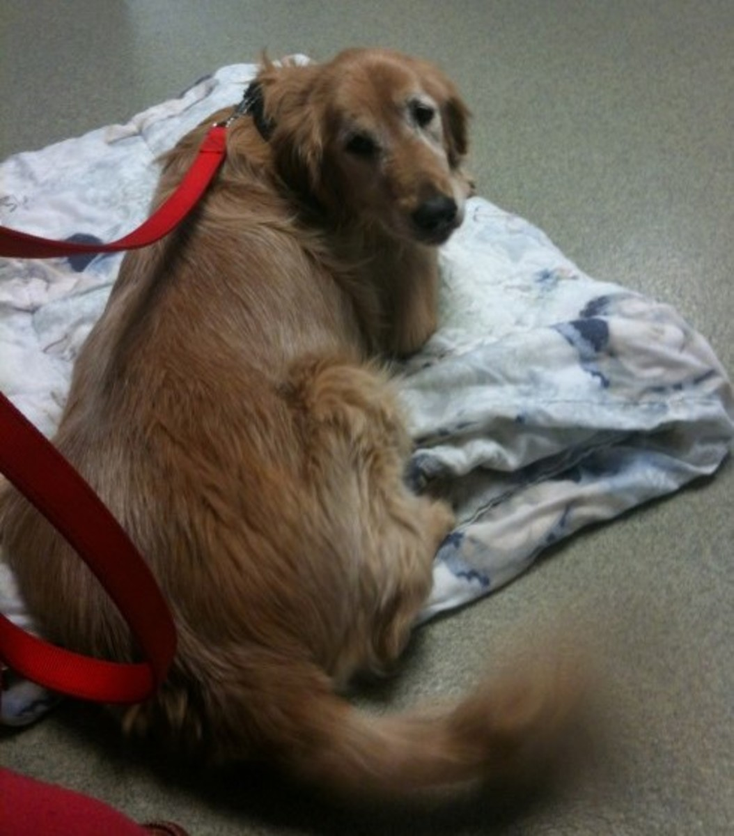 Amber at the hospital - her last day.  Making that decision in putting a pet down is one of the toughest you'll have to make.