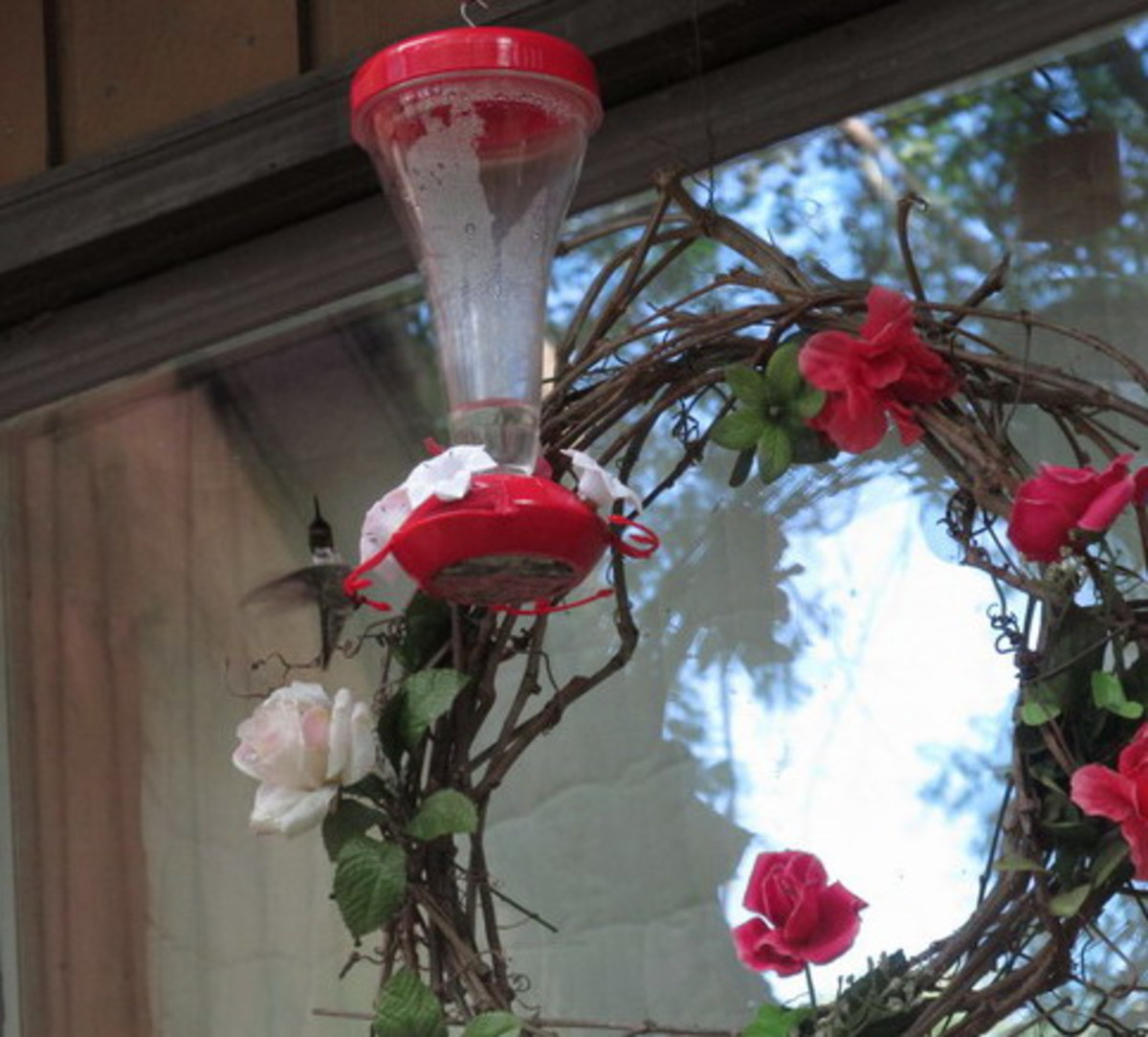 Male Ruby Throated Hummingbird likes the nectar feeder placed in front of my rose wreath!