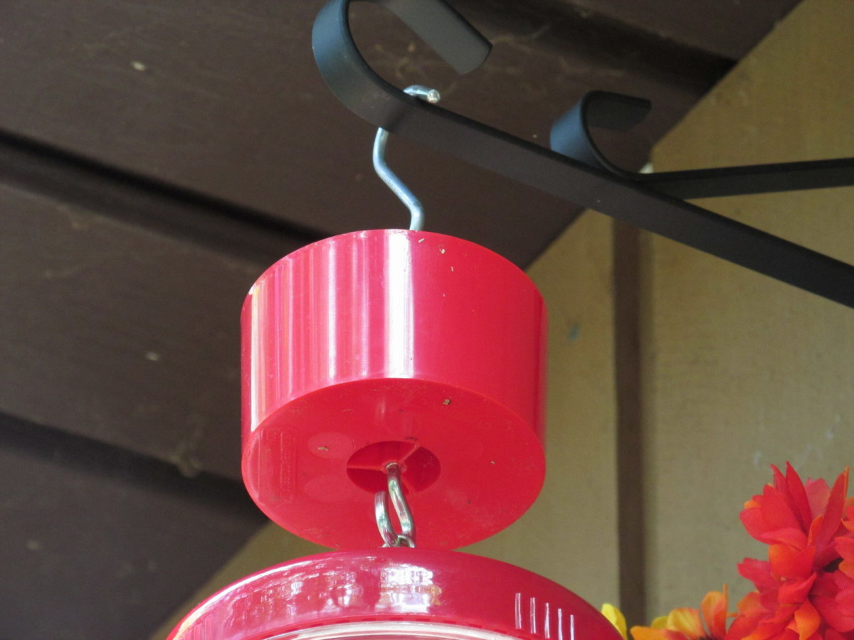 An ant moat attached to the top of a hummingbird feeder does a good job of keeping ants away from the nectar.