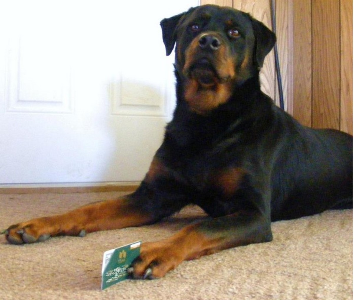 "Is your ""dominant"" dog taking charge of your credit card?"