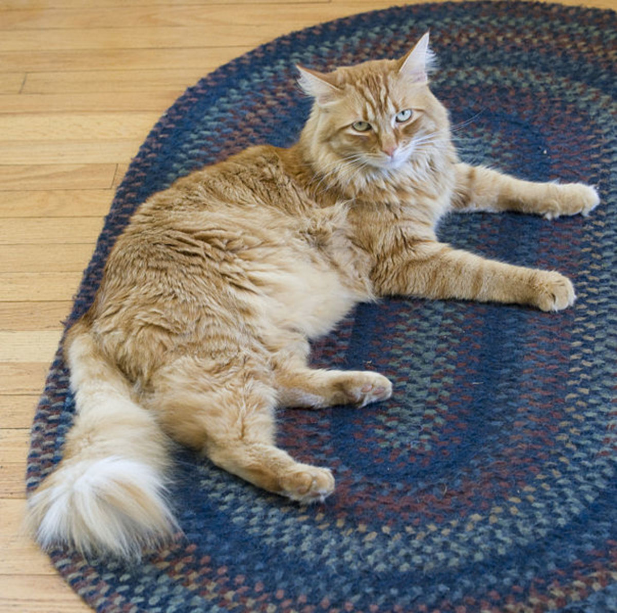Older cats sometimes face kidney failure.