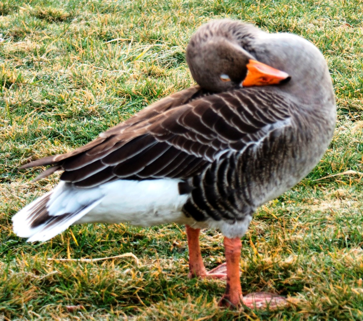 Awesome new yoga pose: sitting duck. Can you do this? Didn't think so!