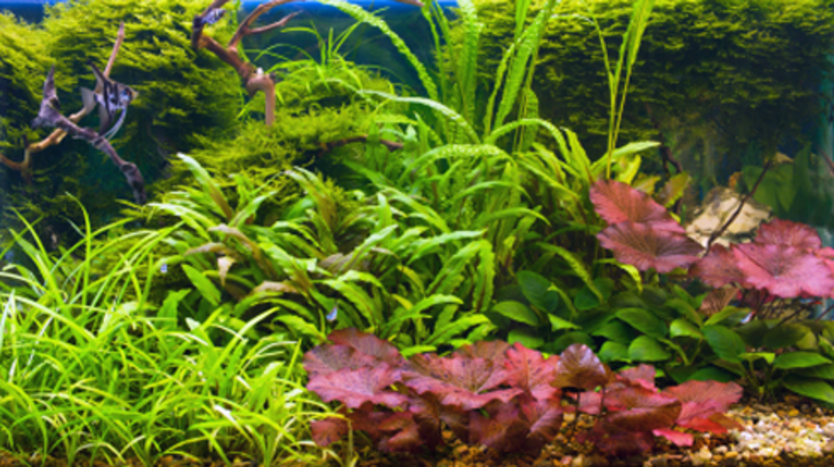 Lighting For A Planted Aquarium Pethelpful