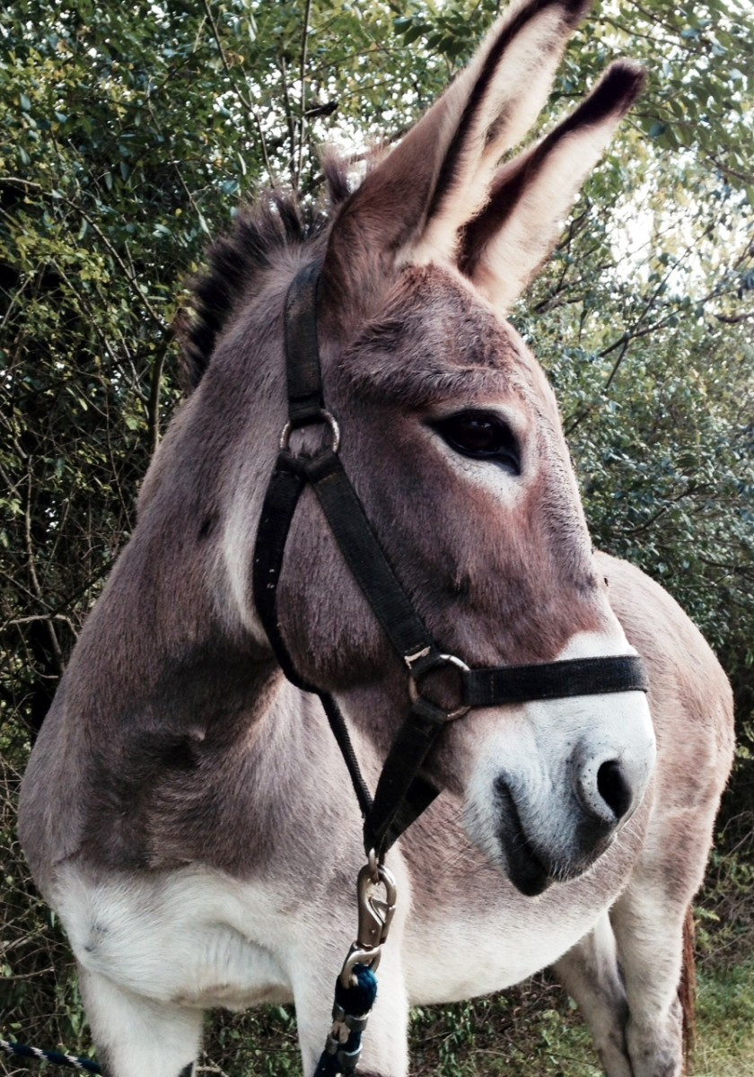 Dixie, my brother's pet donkey, says no name calling!  You're not always so nice yourself.