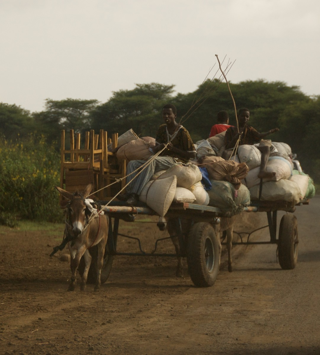 When is the last time you worked this hard?  This Ethiopian donkey hardly has the good life.