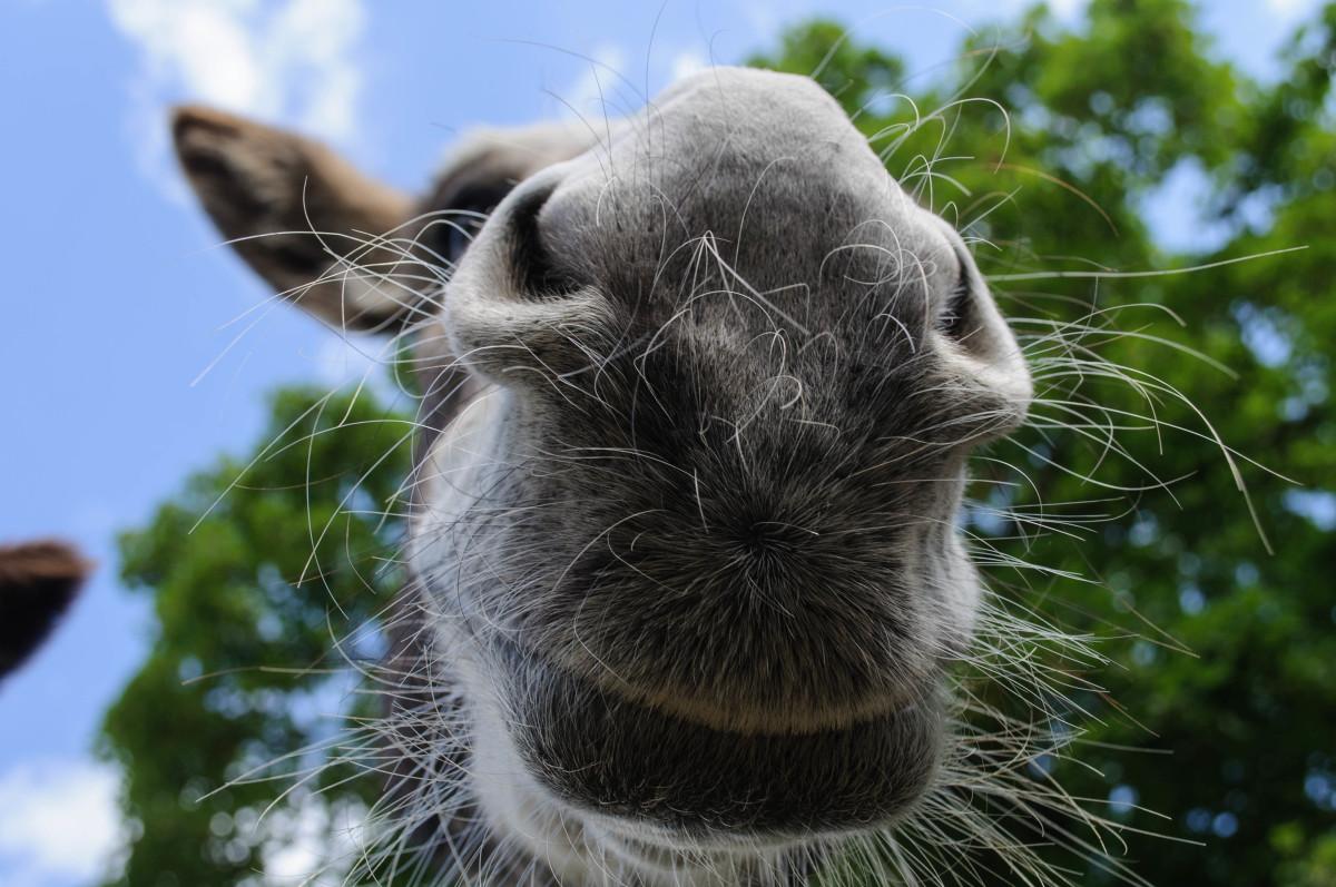 Donkey love.  Insert your own joke here.