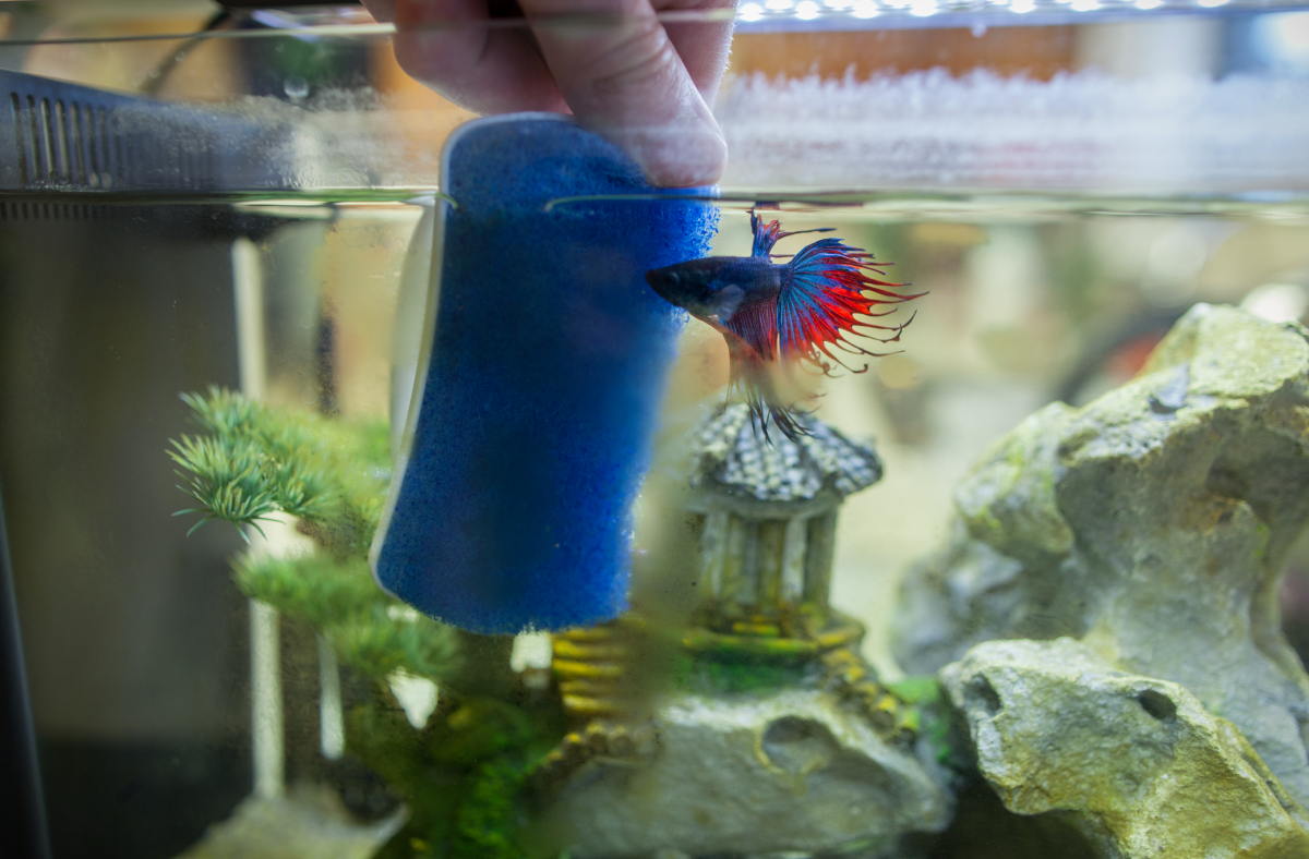 how to clean your fish tank decorations
