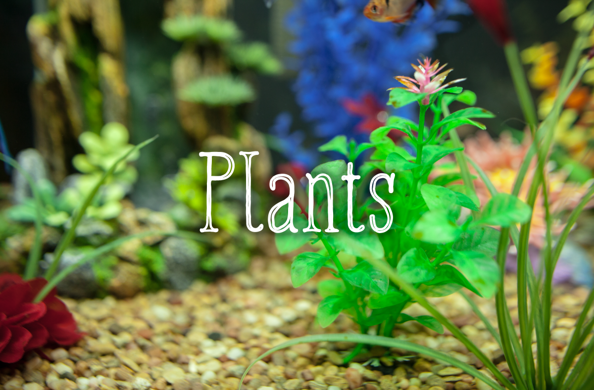Fake plants can lend your tank a splash of colors. If you are using live plants, make sure that they are a species that can be fully submerged in water.