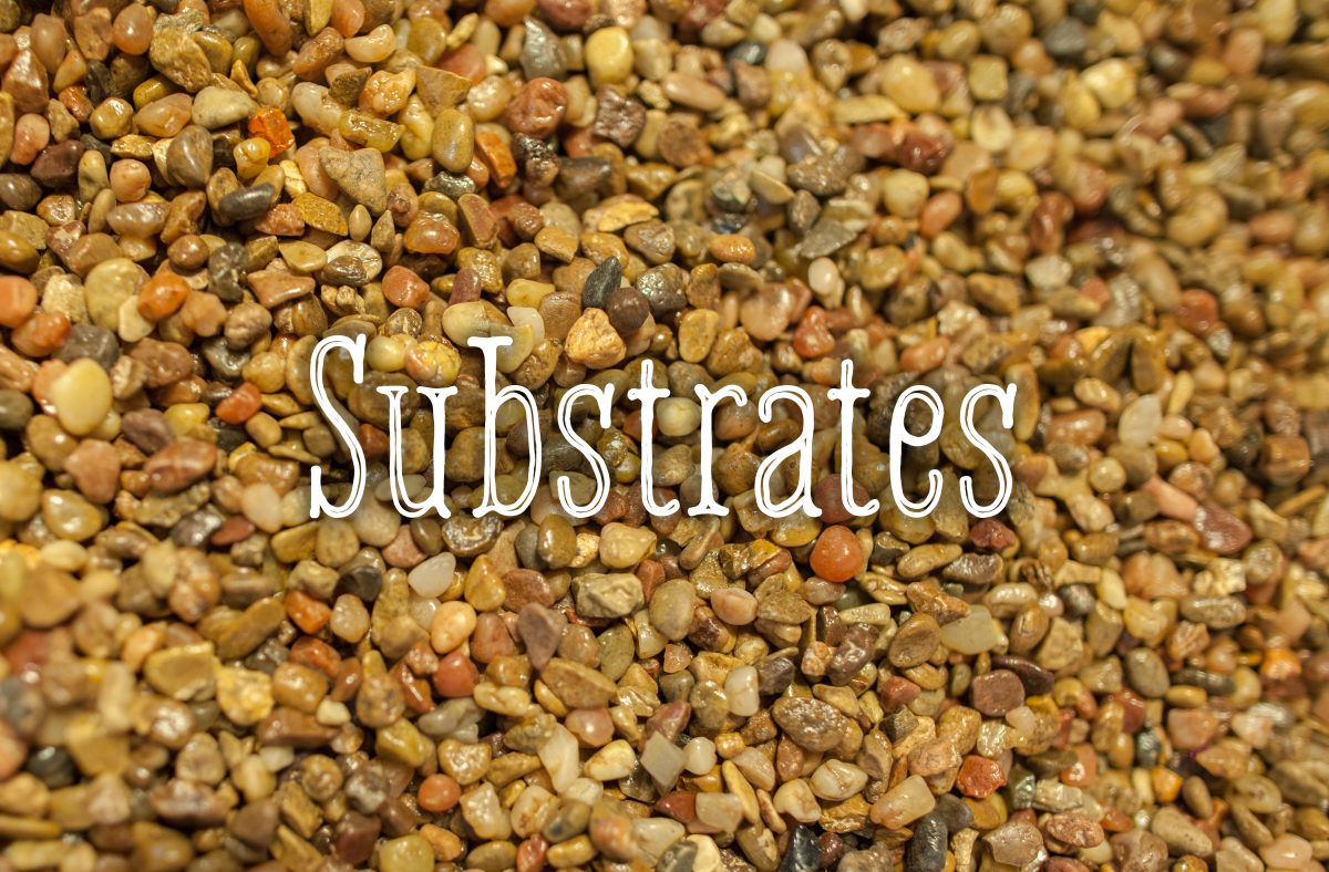 The first step in decorating your fish tank is choosing which substrate to use to cover the bottom.
