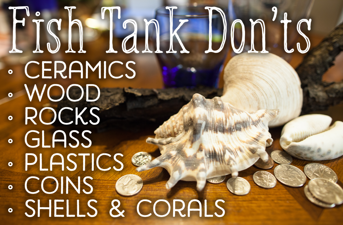 Ceramics, wood, rocks, plastics, painted glass, coins, shells and corals may not be safe decorations for your tank.