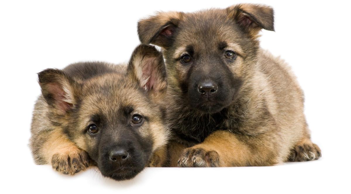 Fierce Male Dog Names
