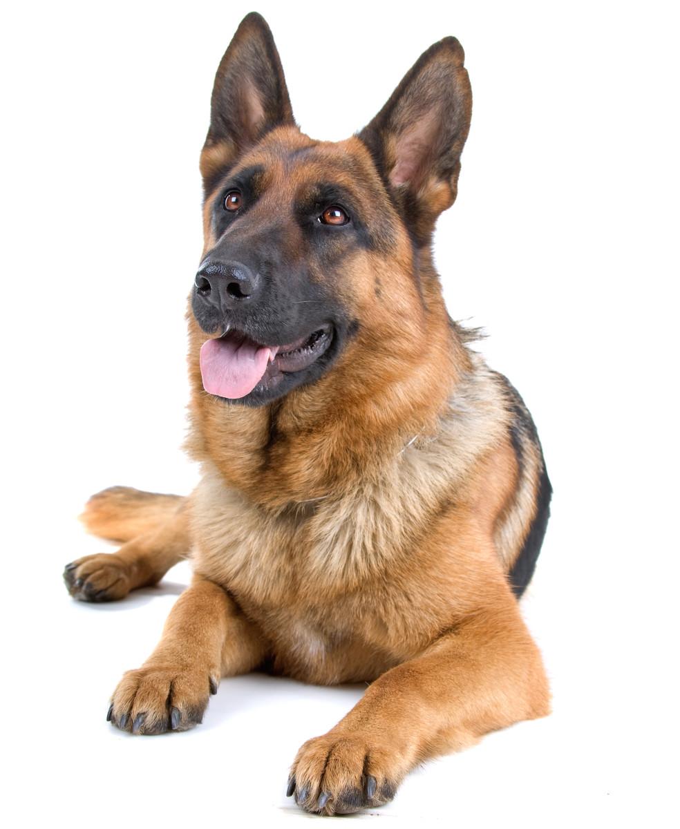 Roman Atwood Dog Names