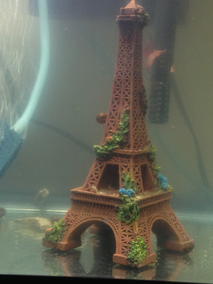 Snails climbing an aquarium accessory.