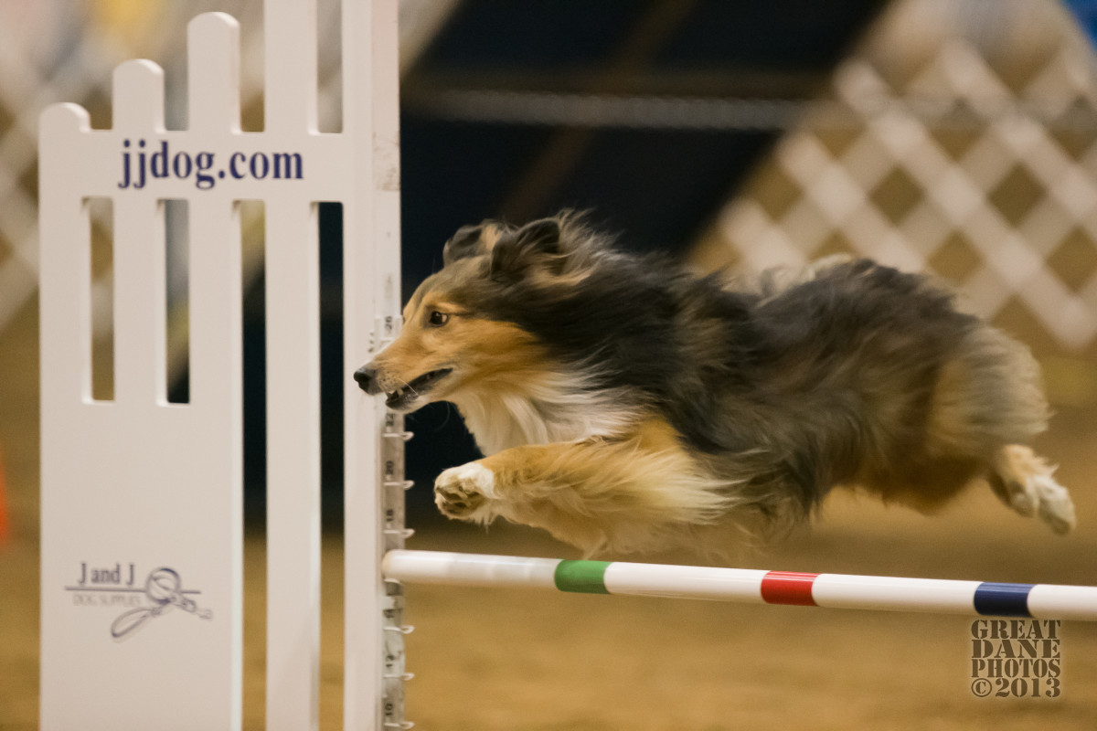 what-every-beginning-agility-competitor-should-know-tips-for-the-rookie
