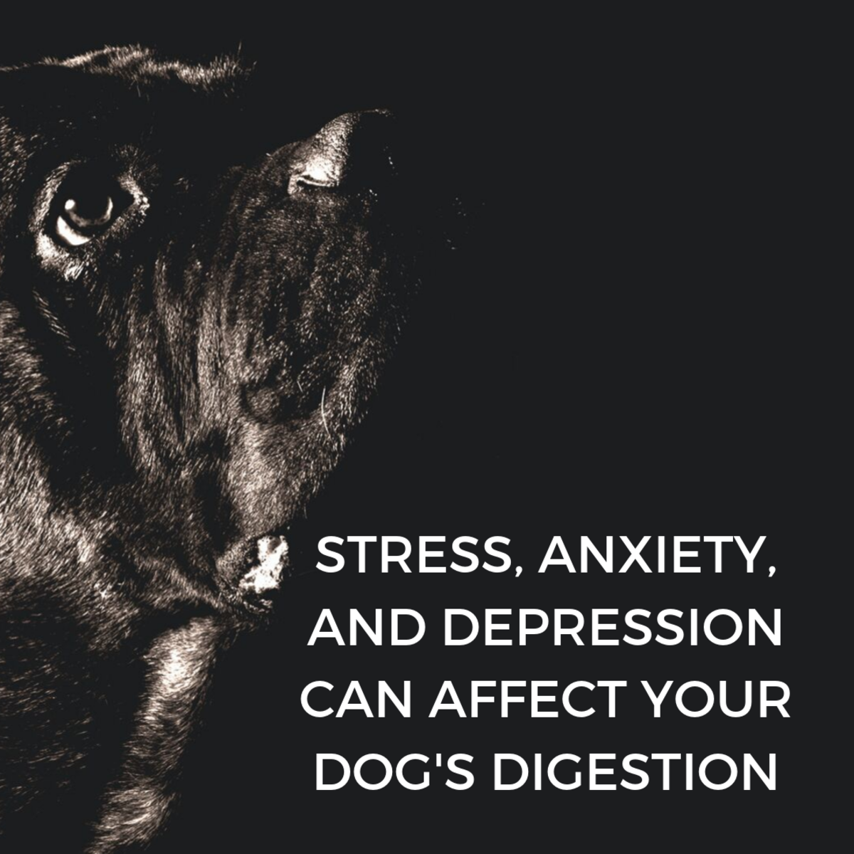 Many factors can influence your dog's well-being.