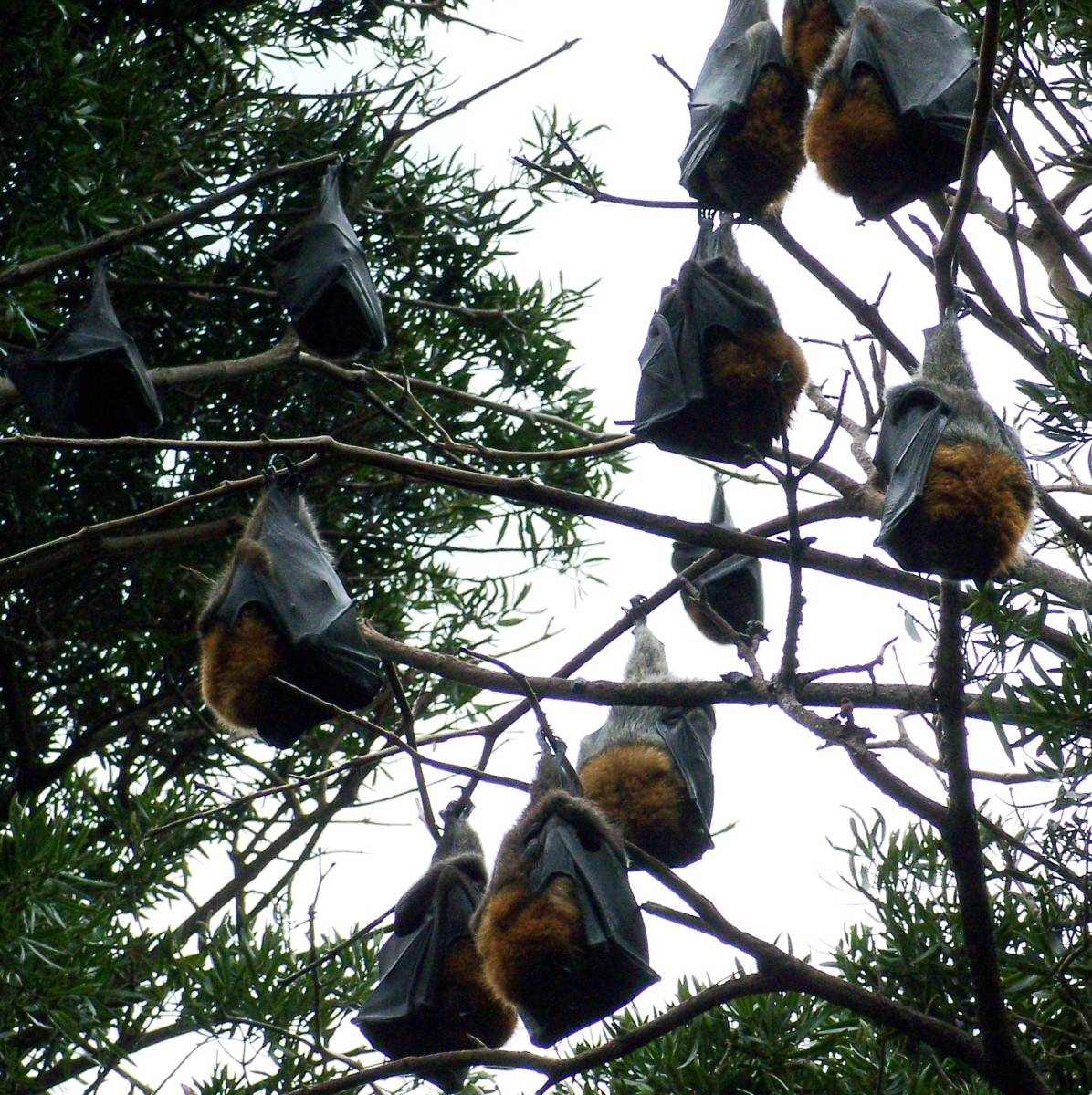 Is this a Skeeter Eater Convention?  One bat can consume up to 1,200 mosquitoes an hour!