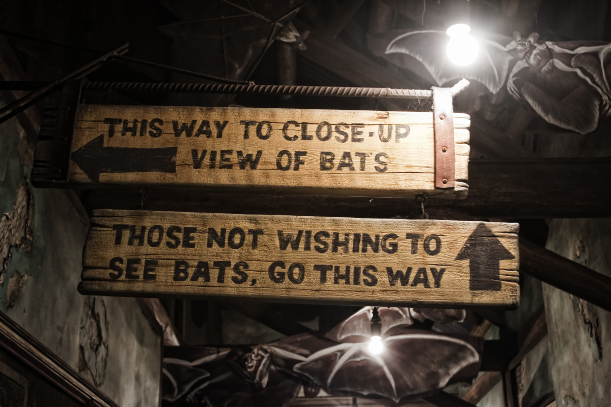 Scared of bats?  This is one case when it pays to read the signs.