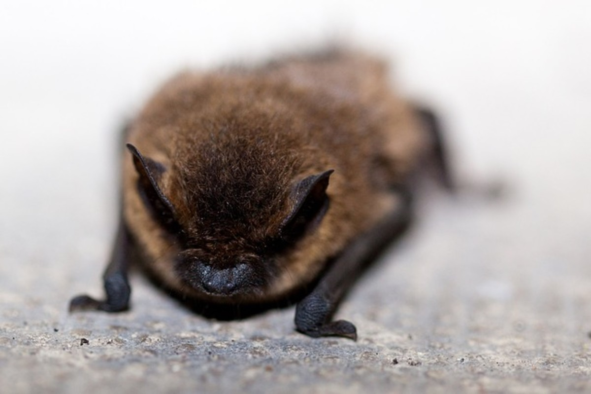 This bat hopes you can use the life lessons he and his friends have shared.