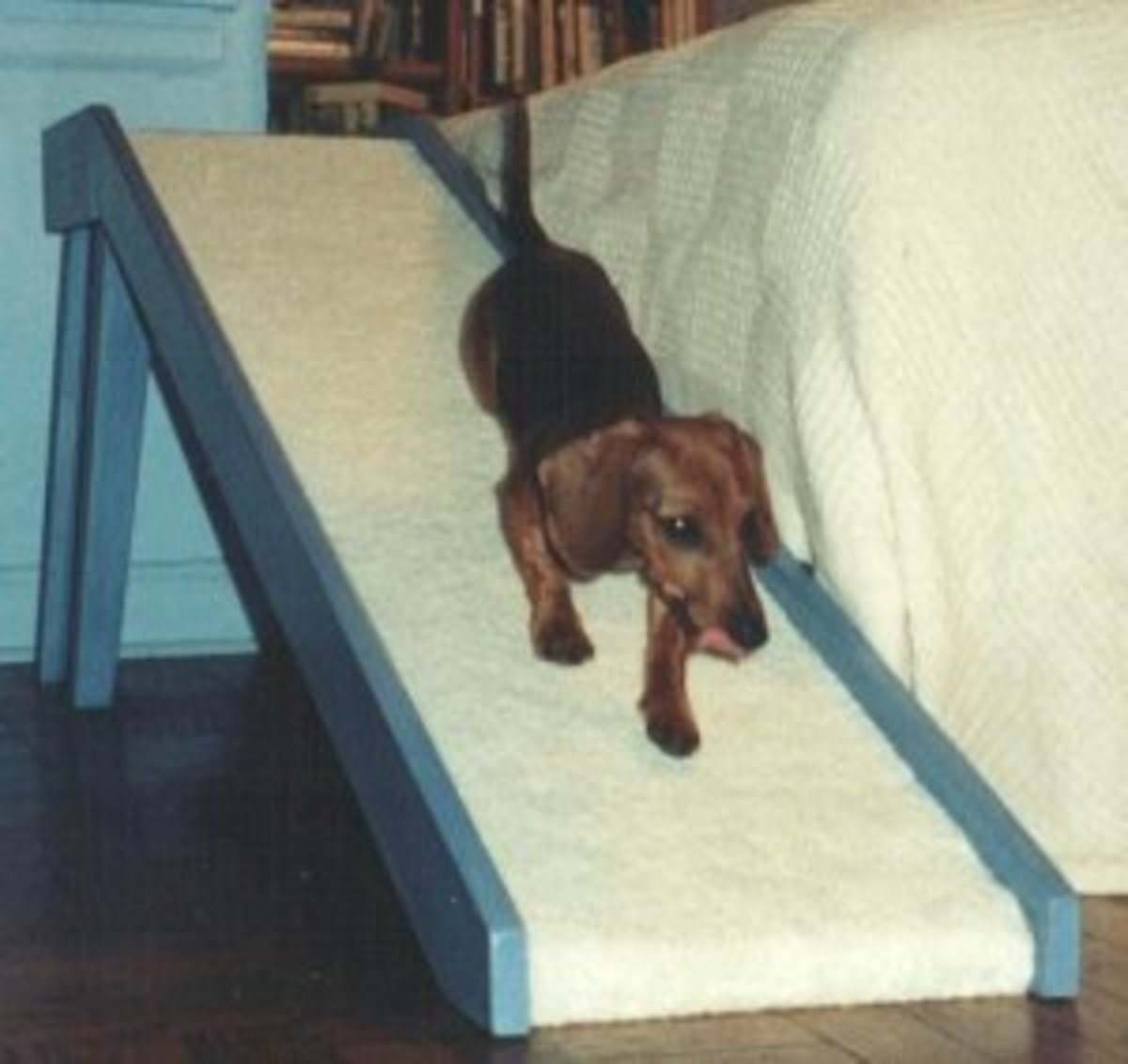 How to Prevent Back Problems in Dachshunds | PetHelpful