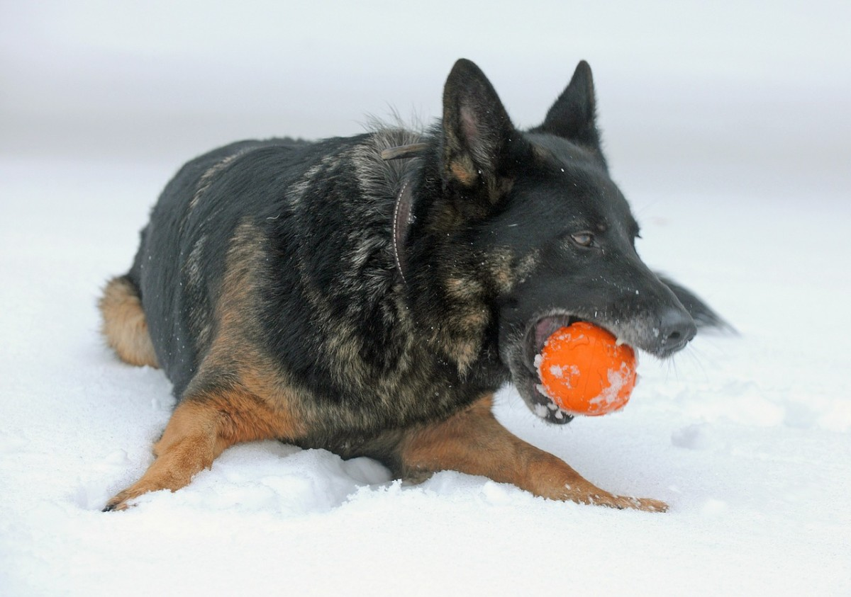 After taking your dog out for playtime in the snow, be sure to clean and dry his feet to remove any road salt or de-icing agents he might have picked up outside.