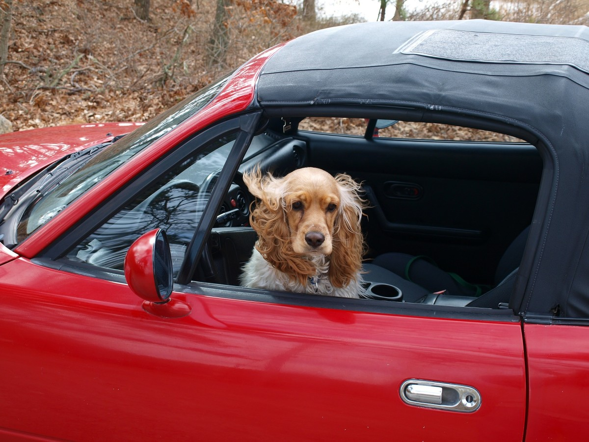 Even with all the windows rolled up, your car is not a good place to keep your dog for too long. Your car can get quite cold in the middle of winter so sometimes it's best to leave your pets at home when you have to go out.