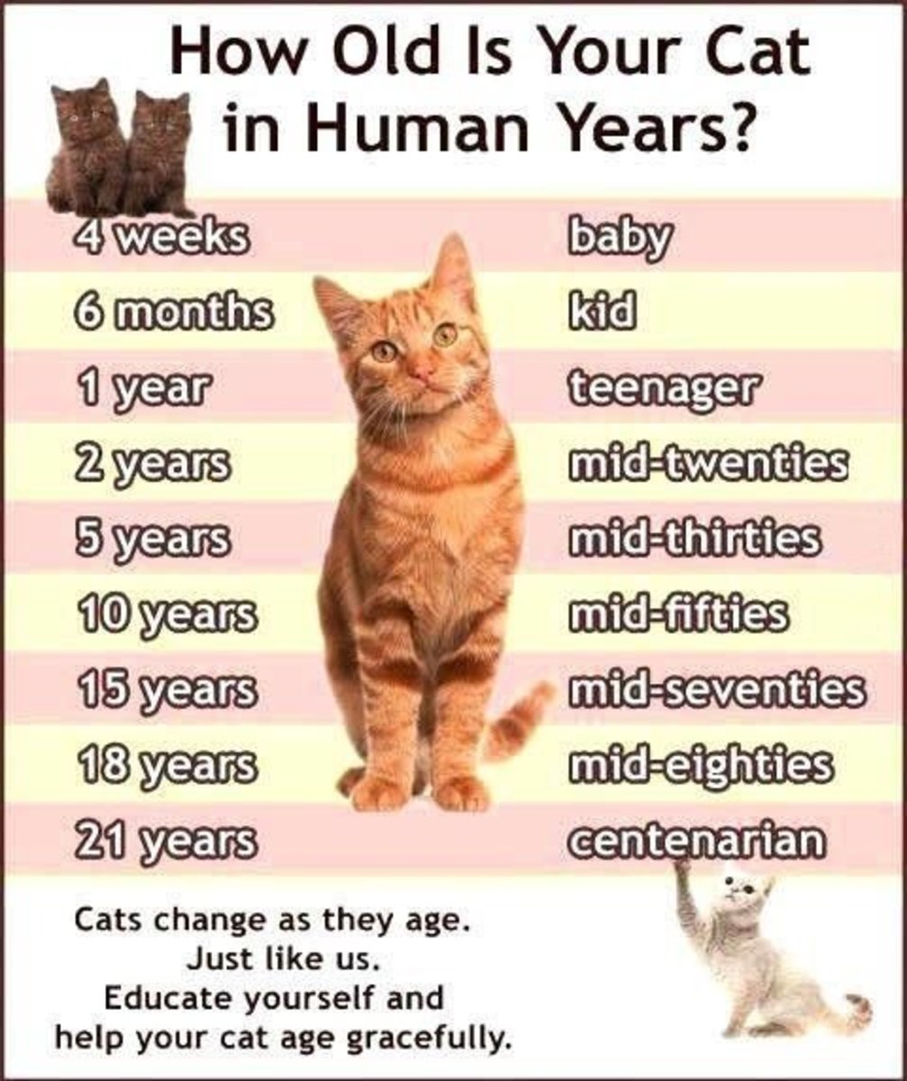 How Do Cats Age Compared To Dogs
