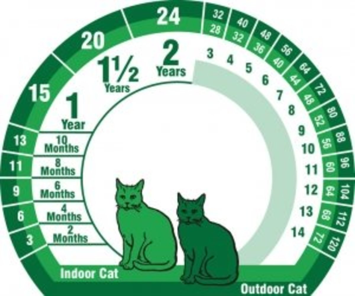 Indoor and outdoor cats' aging chart.