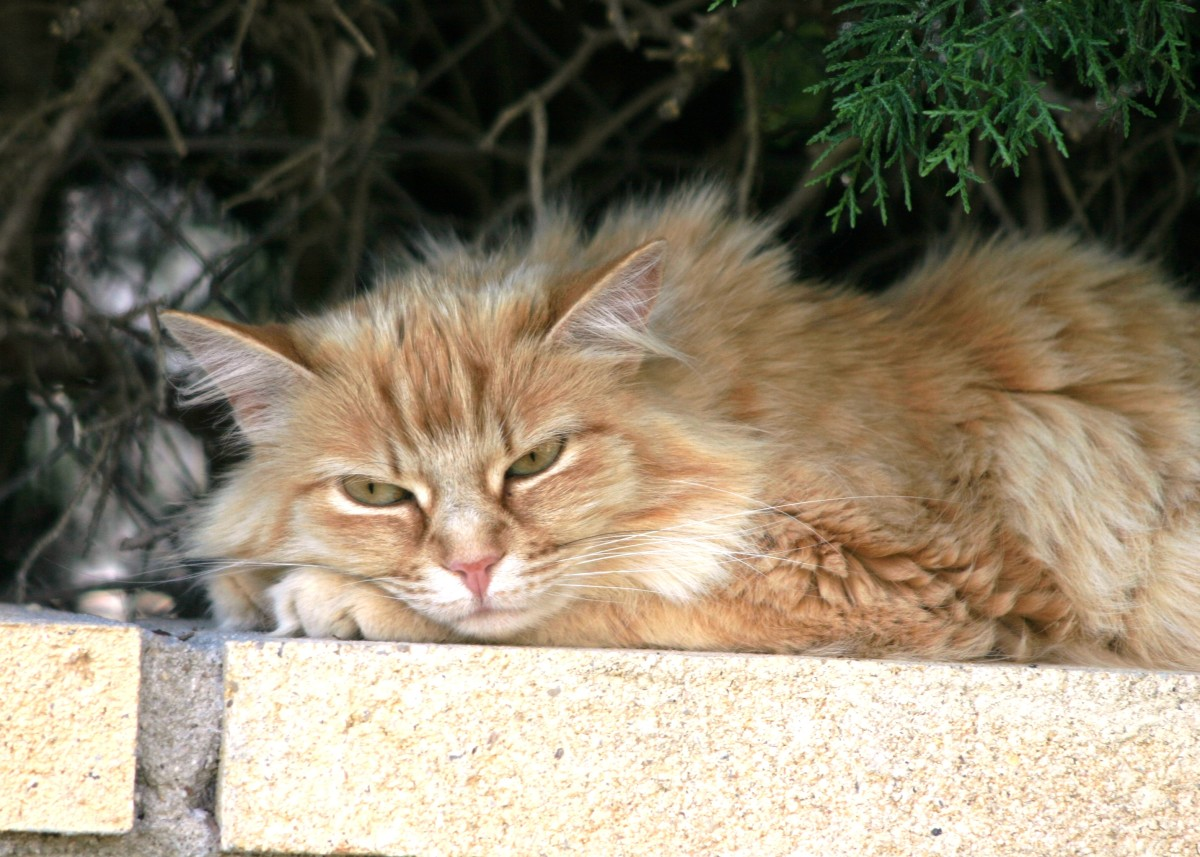 Beware!  This lovely feline is plotting his revenge on cat haters in the name of catkind.  Ain't nothing like cat karma!  Meow!