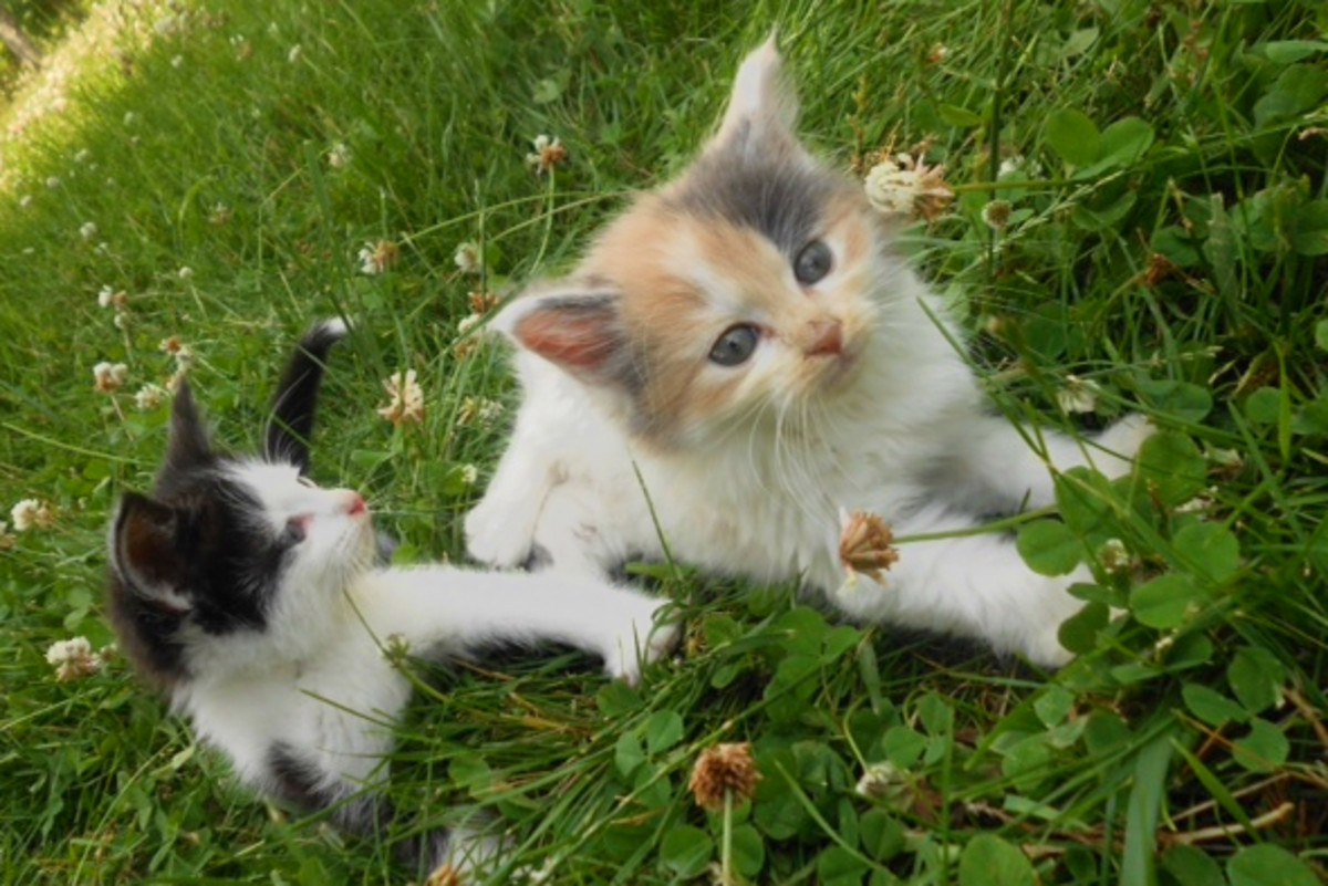 There's no way any fifth grader is cuter than these kittens!
