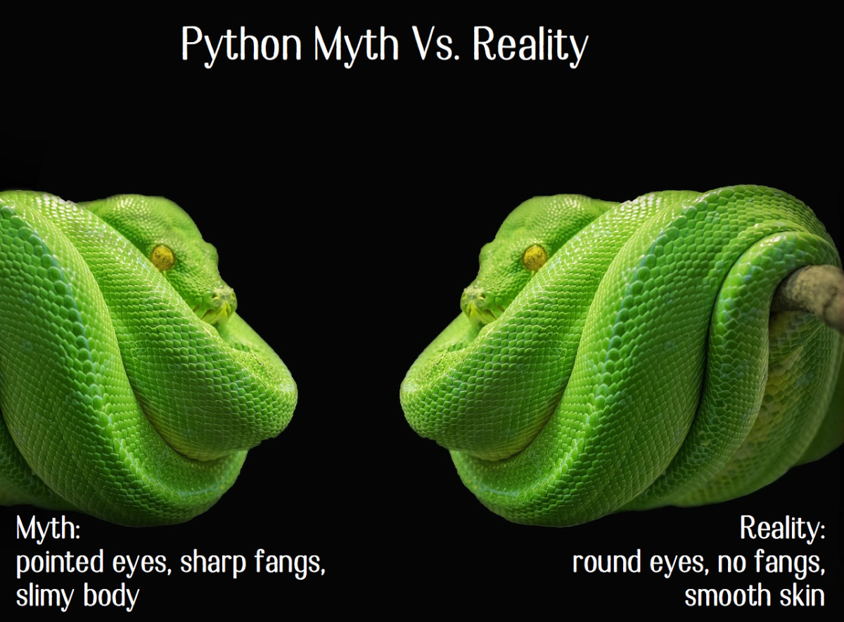 Tree Pythons Easy Care