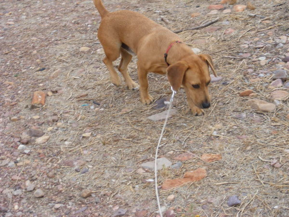 Dog foraging behaviors