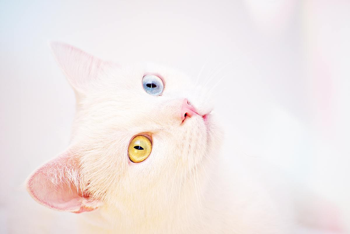 A white cat with mixed-colored eyes is most likely to be deaf on the blue-eyed side.