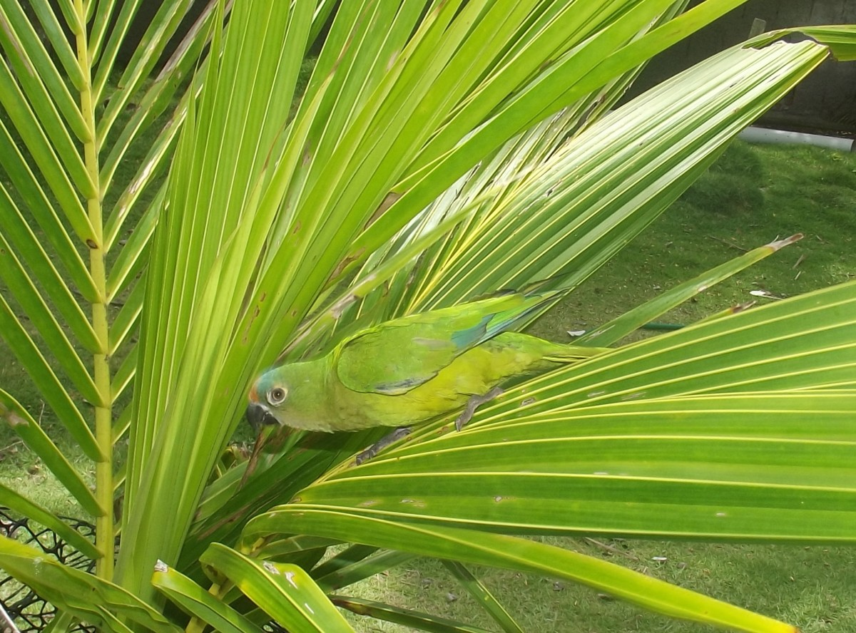 Play should be creative and can be fun for both of you. My parrot loves hide-and-seek!