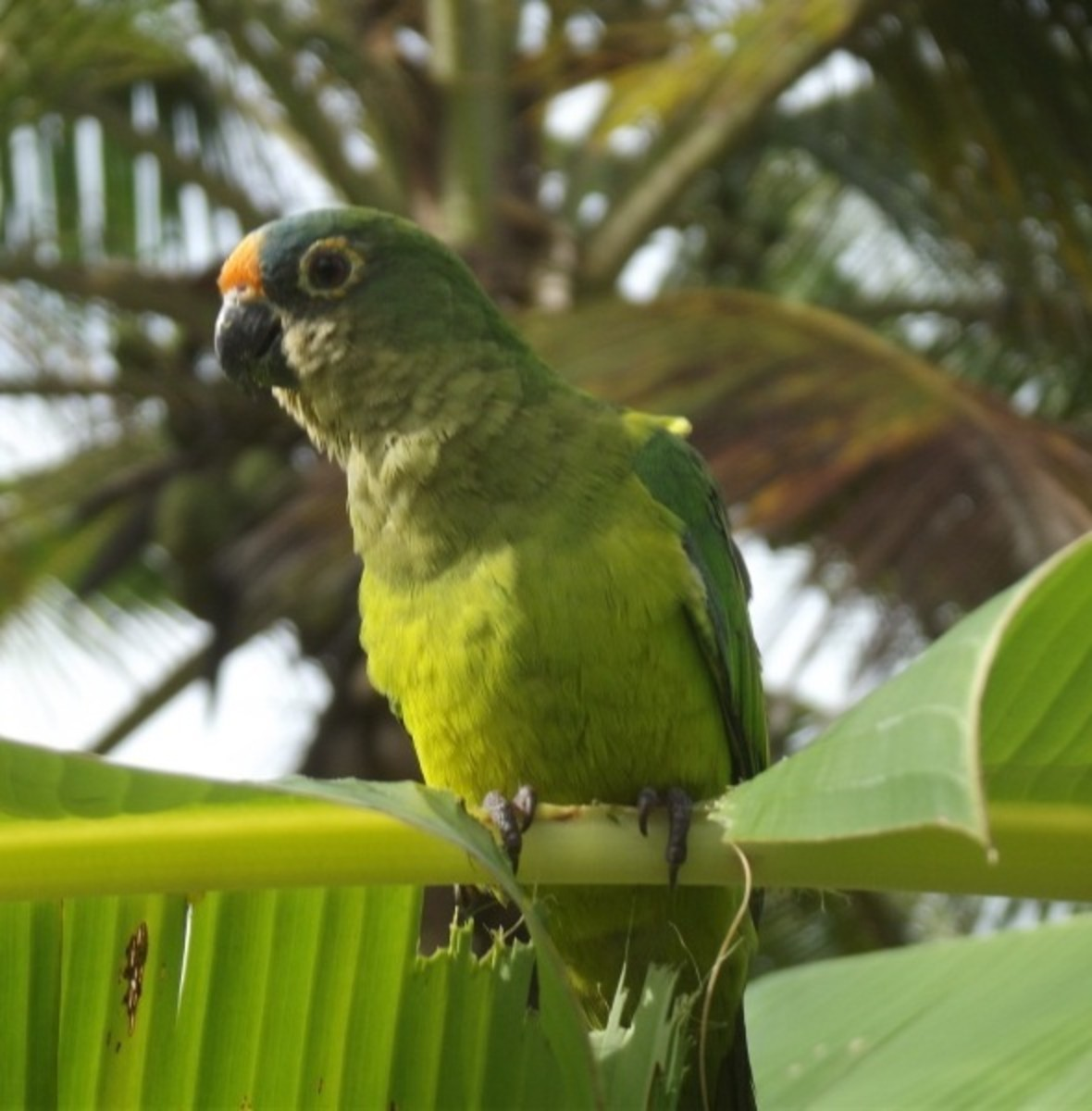 A parrot on an exercise program will be healthier and better behaved.