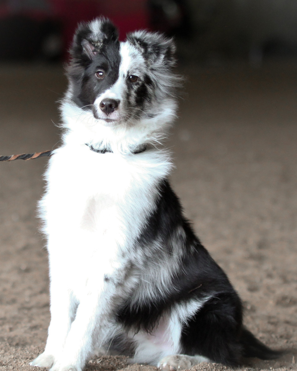 The author's new puppy, Aenon, has DNA and inherited epigenetic potential.