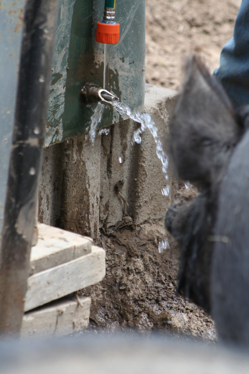 Our pigs drink from a 'water nipple' inserted in the bottom of a large plastic garbage bin used to hold fresh water. It is attached to a tree or a fence post and raised up on cement blocks, preventing them from spilling and wasting it.