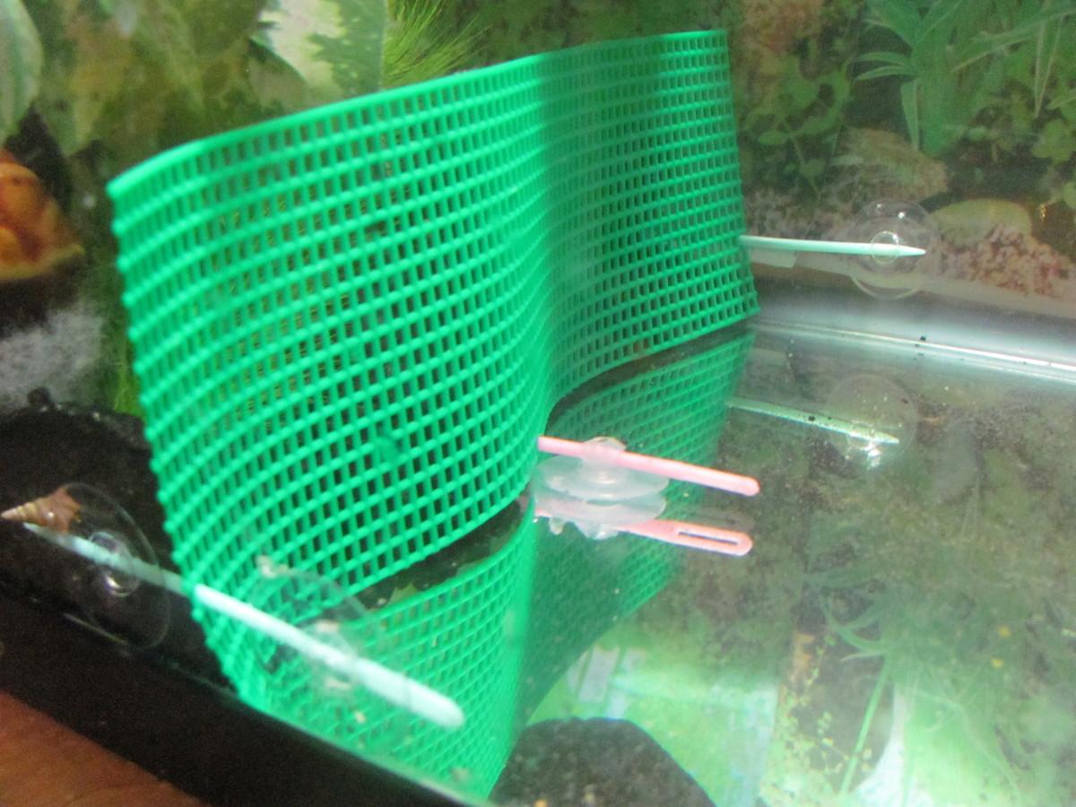 how-to-safely-replace-aquarium-gravel