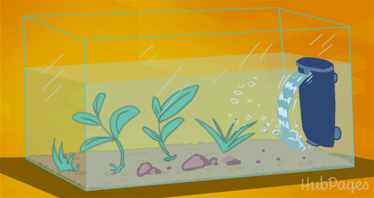 All types of filters—submersible, hang-on, and external—are great choices. Pick one that is easy to use and that will be most practical for your aquarium.