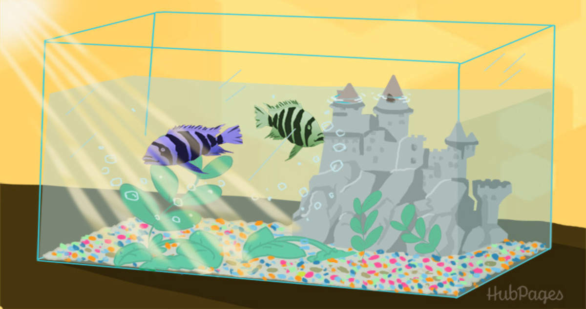 Aquariums with decorations like castles require more frequent cleaning than those with rocks.