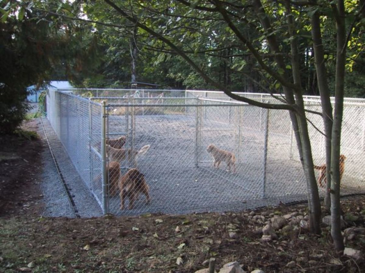 Outdoor dog kennel with Ecogrid