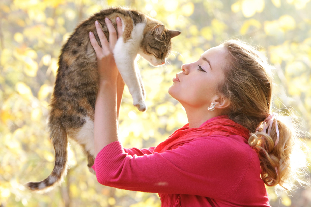 How to Make Homemade Cat Treats
