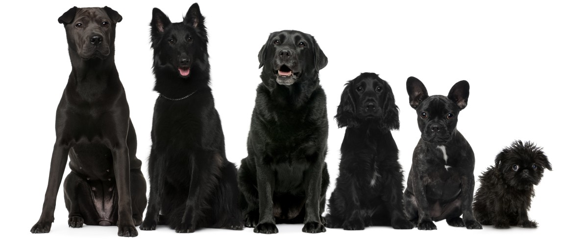 60-black-dog-names