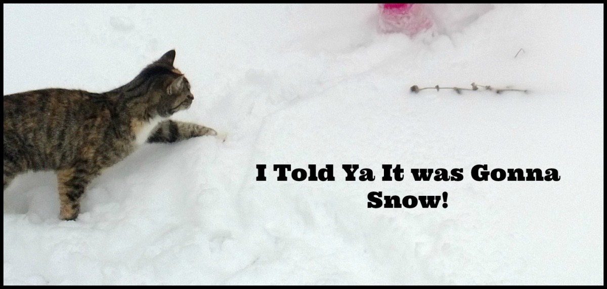 Some cats predict weather because they like the snow.