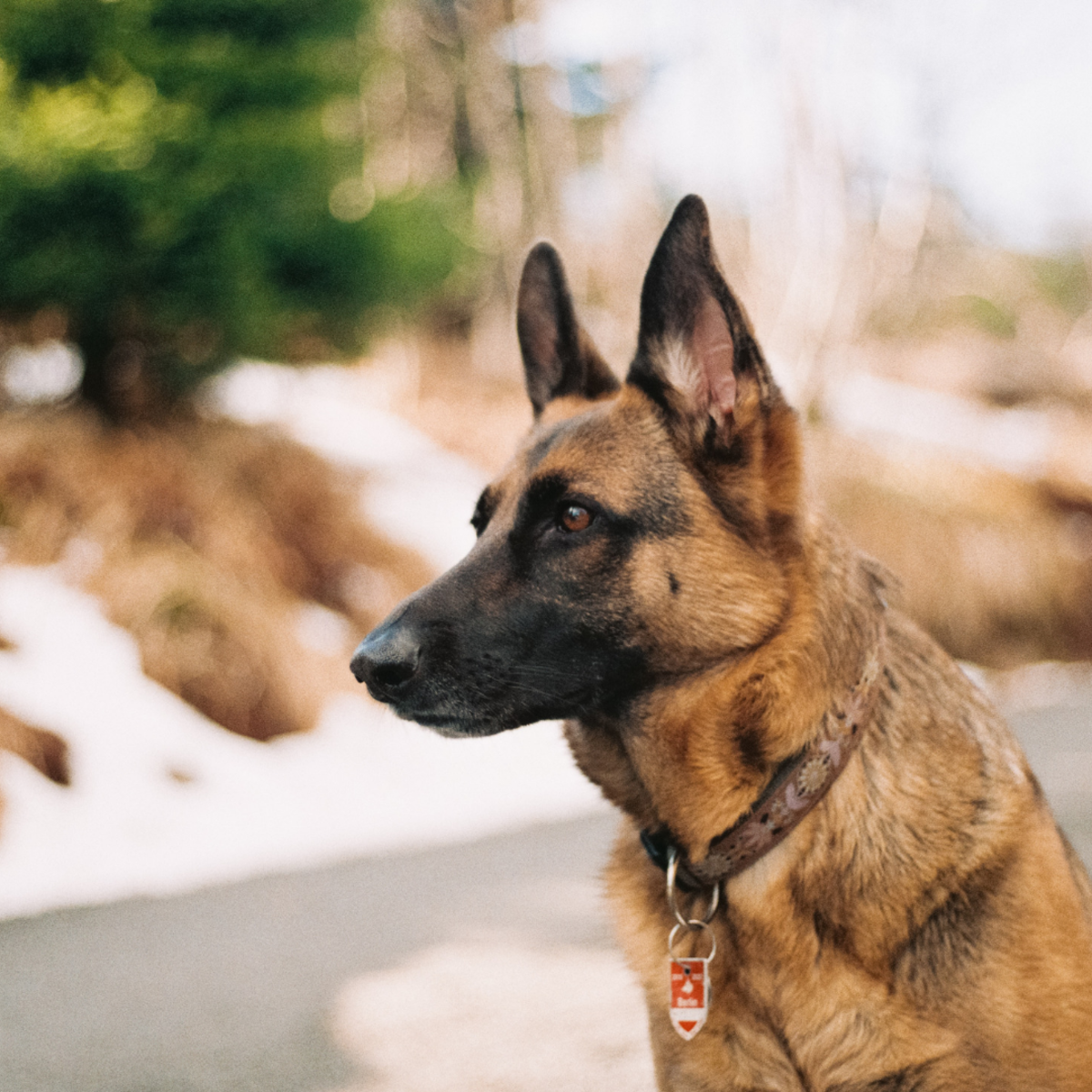 Would Your Dog Be Safe If They Broke Loose?