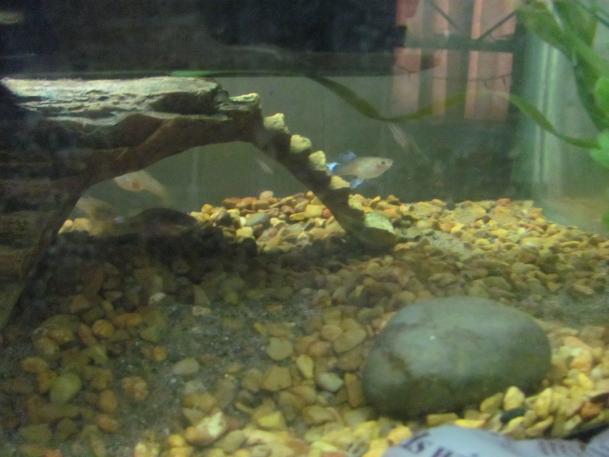 Top 10 mistakes new fish hobbyists make pethelpful for Cloudy water in fish tank solutions
