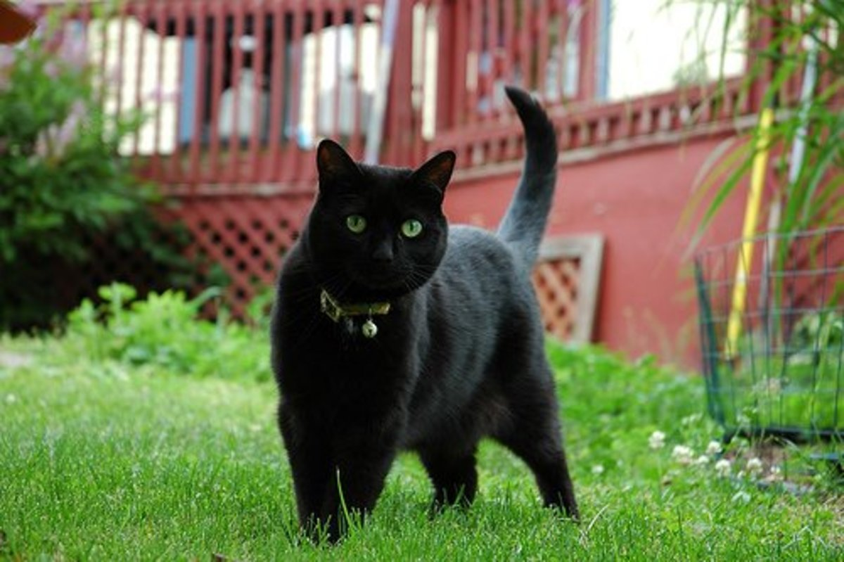 When letting your outdoor cat explore their new backyard for the first time, consider keeping them on a leash and don't leave them unsupervised their first time outside in their new neighbourhood.